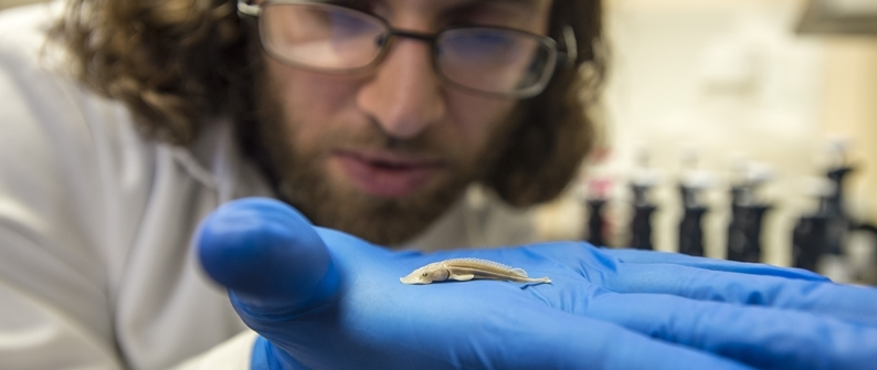 Student Examines Larval Sturgeon