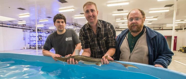 Raising Sturgeon in the new state-of-the-art Saluki Aquarium
